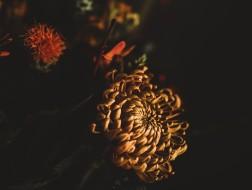 秋の夜長にぴったりな寛ぎのハーブティー講座