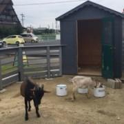 2匹のヤギをめぐる、小さな循環型社会