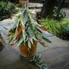葉っぱと木の実のツリー作り